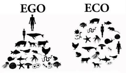 egoeco-image